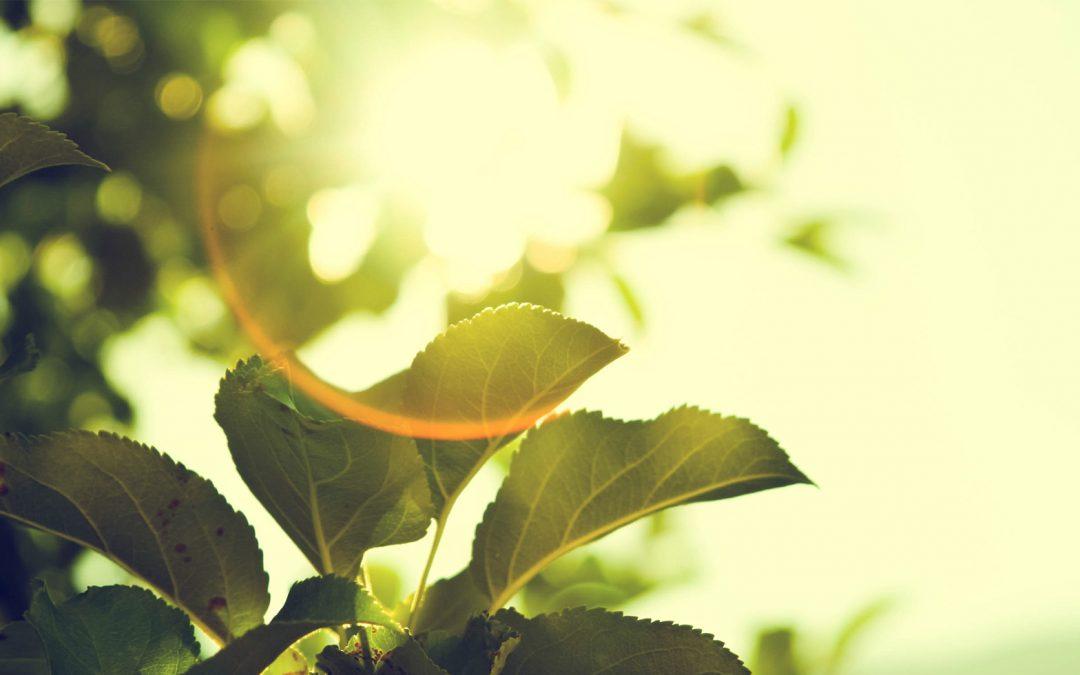 7 Tips for Going Green